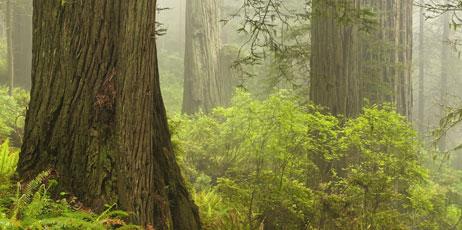 Cucumber Images/Shutterstock.com