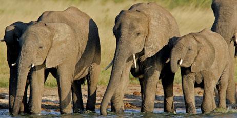 EcoPrint/Shutterstock.com
