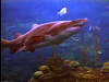 Aquarium Attractions