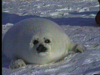 Canada Seal Watching Tours