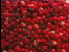 Cranberry World - Plymouth