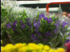 Holland Flower Auction