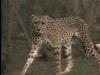 Kenya Wildlife Preservation