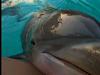 Orlando Dolphin Encounters