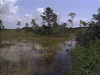 Saving the Everglades